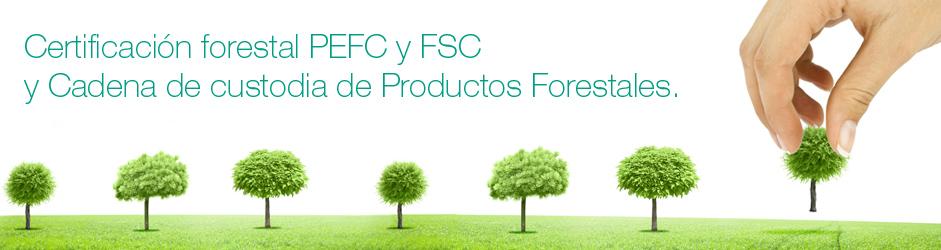 certificacion-forestal-cadena-de-custodia